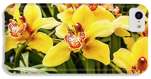 Orchid iPhone 5c Case - Exotic Orchids  by Jorgo Photography - Wall Art Gallery