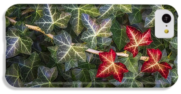 IPhone 5c Case featuring the photograph Fall Ivy Leaves by Adam Romanowicz