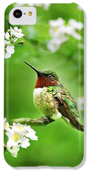 Fauna And Flora - Hummingbird With Flowers IPhone 5c Case