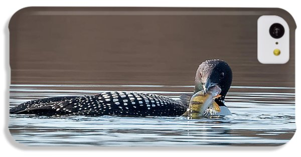 Feeding Common Loon Square IPhone 5c Case by Bill Wakeley