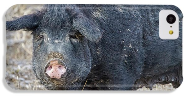 IPhone 5c Case featuring the photograph Female Hog by James BO Insogna