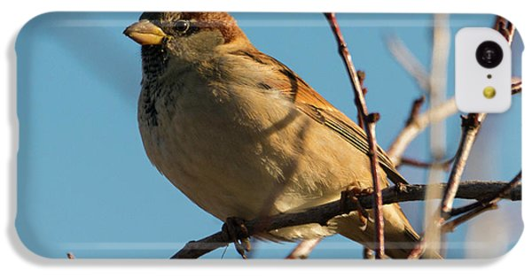 Female House Sparrow IPhone 5c Case by Mike Dawson