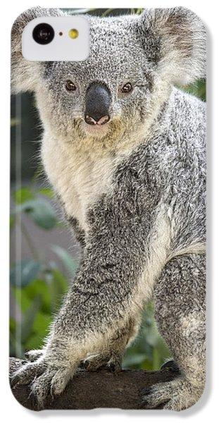 Female Koala IPhone 5c Case by Jamie Pham
