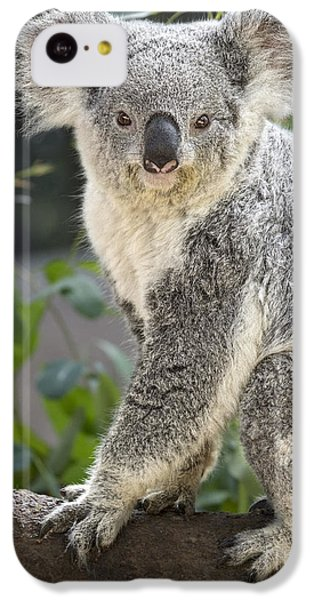 Female Koala IPhone 5c Case