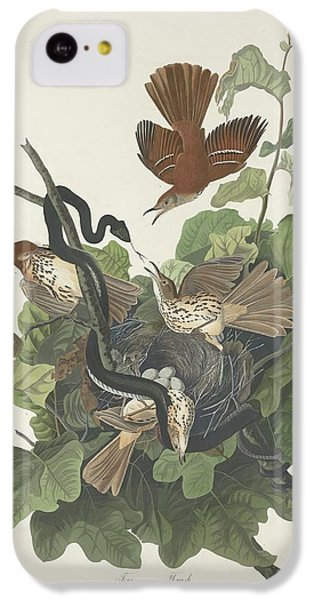 Ferruginous Thrush IPhone 5c Case
