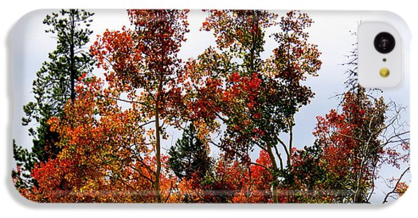 Festive Fall IPhone 5c Case by Karen Shackles