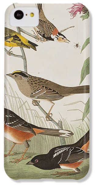 Finch iPhone 5c Case - Finches by John James Audubon
