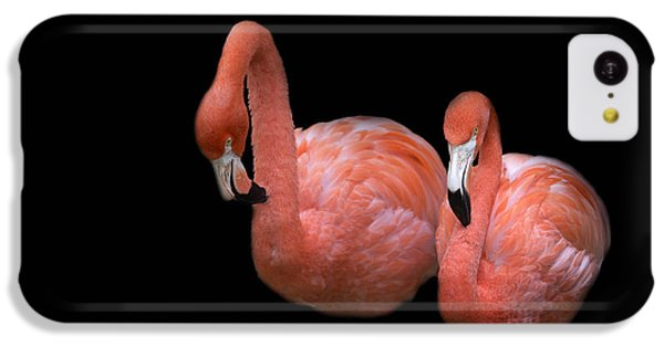 Flamingo 4 IPhone 5c Case by Rebecca Cozart