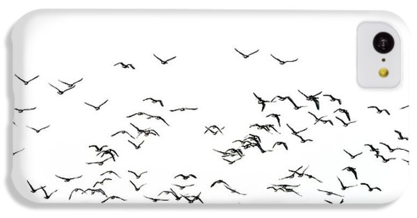 Flock Of Beautiful Migratory Lapwing Birds In Clear Winter Sky I IPhone 5c Case by Matthew Gibson