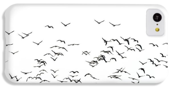 Flock Of Beautiful Migratory Lapwing Birds In Clear Winter Sky I IPhone 5c Case