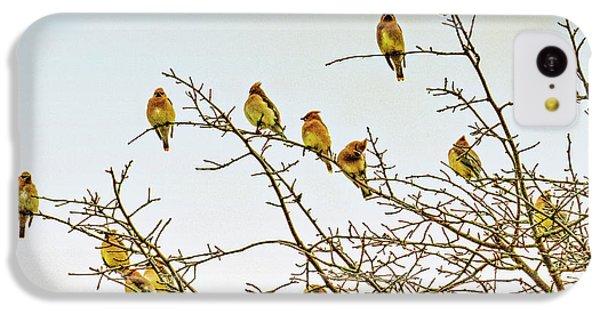 Cedar Waxing iPhone 5c Case - Flock Of Cedar Waxwings  by Geraldine Scull
