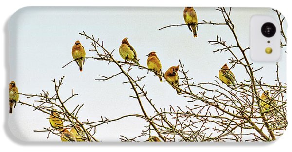 Flock Of Cedar Waxwings  IPhone 5c Case by Geraldine Scull