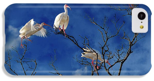 Ibis iPhone 5c Case - Florida Keys The Exaggerated Ibis by Betsy Knapp