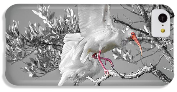 Ibis iPhone 5c Case - Florida Keys White Ibis by Betsy Knapp