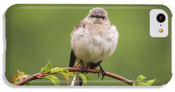 Fluffy Mockingbird IPhone 5c Case by Terry DeLuco