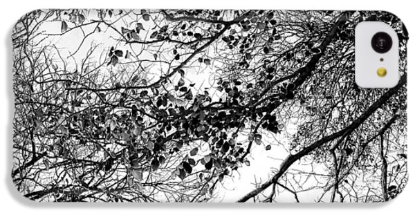 Featured Images iPhone 5c Case - Forest Canopy Bw by Az Jackson