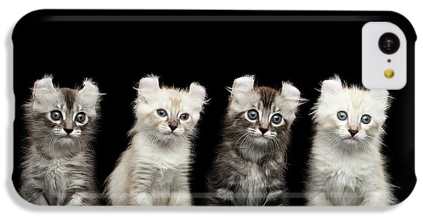 Cat iPhone 5c Case - Four American Curl Kittens With Twisted Ears Isolated Black Background by Sergey Taran