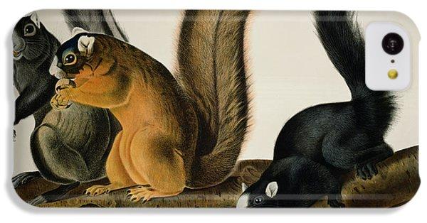 Fox Squirrel IPhone 5c Case by John James Audubon