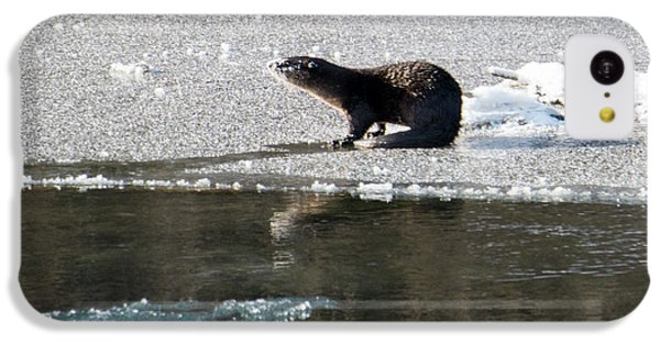 Frosty River Otter  IPhone 5c Case by Mike Dawson