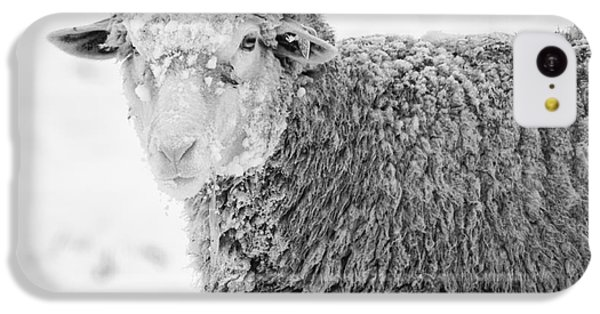 Sheep iPhone 5c Case - Frozen Dinner by Mike  Dawson