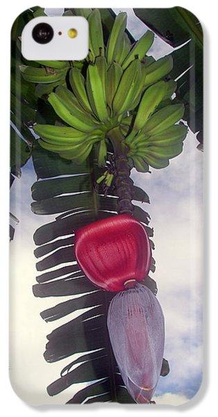 Fruitful Beauty IPhone 5c Case by Karen Wiles