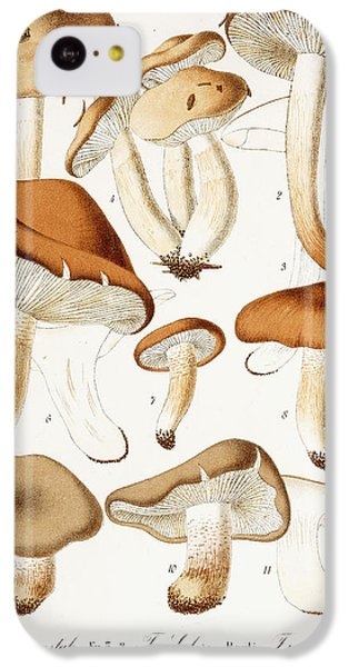 Fungi IPhone 5c Case by Jean-Baptiste Barla
