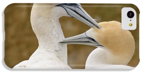 IPhone 5c Case featuring the photograph Gannet Pair 1 by Werner Padarin