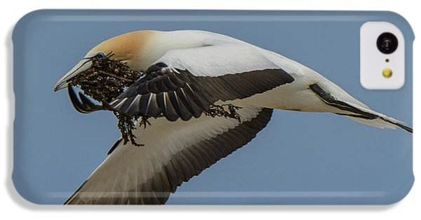 IPhone 5c Case featuring the photograph Gannets 1 by Werner Padarin