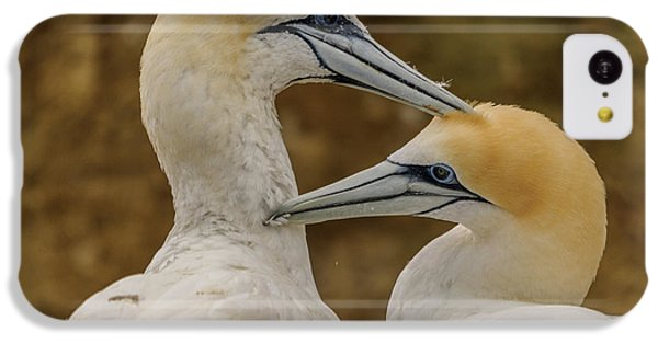 Gannets 4 IPhone 5c Case by Werner Padarin