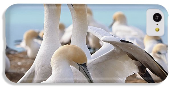 Gannets IPhone 5c Case by Werner Padarin