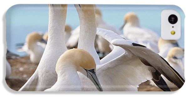 IPhone 5c Case featuring the photograph Gannets by Werner Padarin