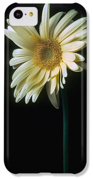 Gerber Daisy IPhone 5c Case by Laurie Paci