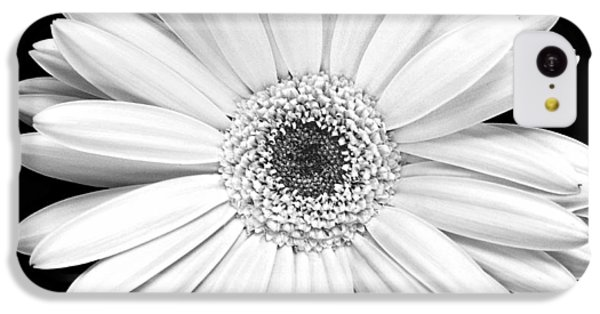 Single Gerbera Daisy IPhone 5c Case