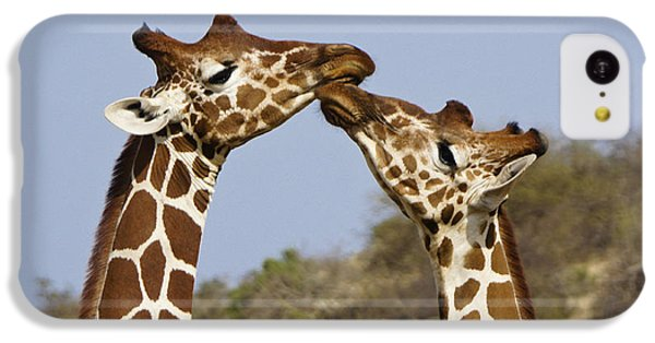 Giraffe Kisses IPhone 5c Case by Michele Burgess