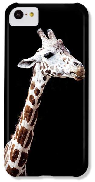 Giraffe IPhone 5c Case by Lauren Mancke