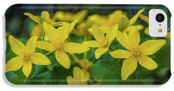 IPhone 5c Case featuring the photograph Gold In The Marsh by Bill Pevlor