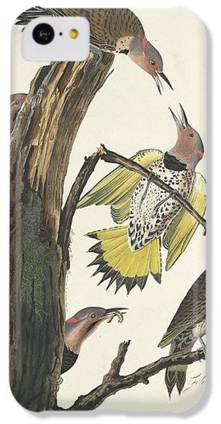 Gold-winged Woodpecker IPhone 5c Case
