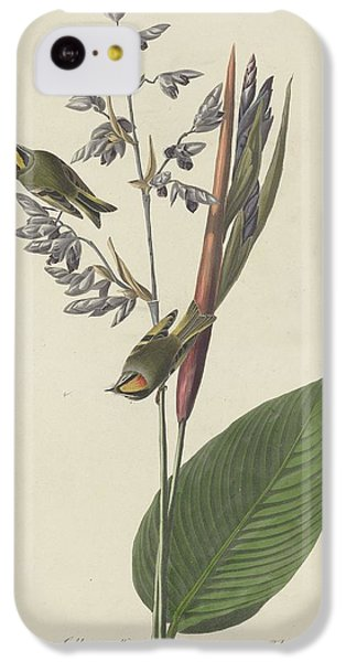 Golden-crested Wren IPhone 5c Case