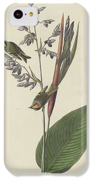 Golden-crested Wren IPhone 5c Case by Anton Oreshkin