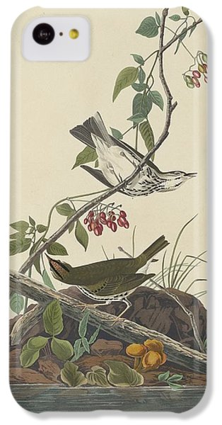 Golden-crowned Thrush IPhone 5c Case by Anton Oreshkin