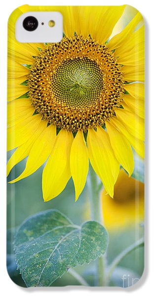 Sunflower iPhone 5c Case - Golden Sunflower by Tim Gainey
