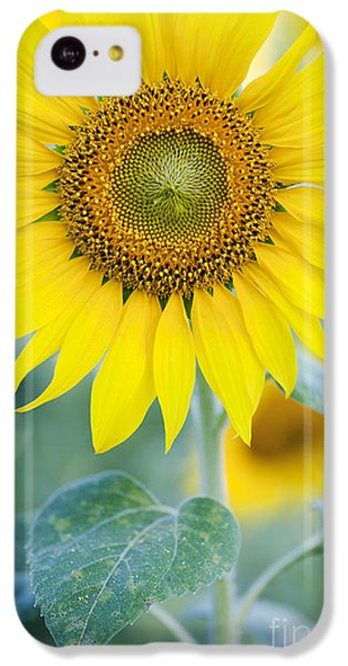 Golden Sunflower IPhone 5c Case by Tim Gainey