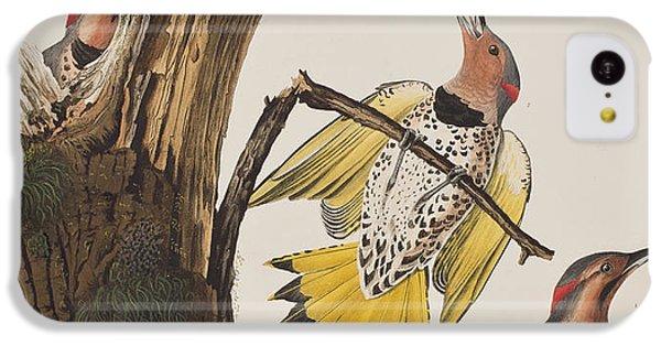 Golden-winged Woodpecker IPhone 5c Case