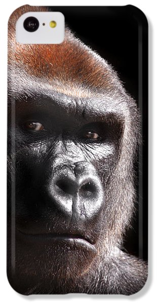 Gorilla ... Kouillou IPhone 5c Case by Stephie Butler