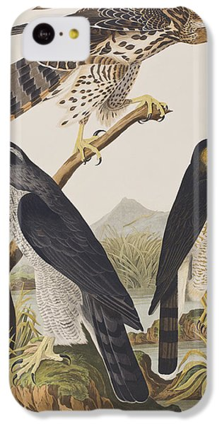 Goshawk And Stanley Hawk IPhone 5c Case by John James Audubon