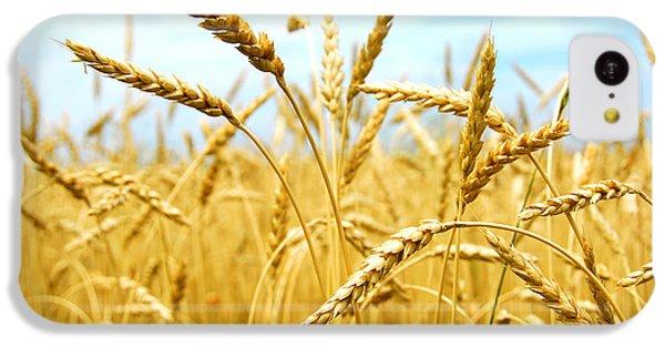 Grain Field IPhone 5c Case by Elena Elisseeva