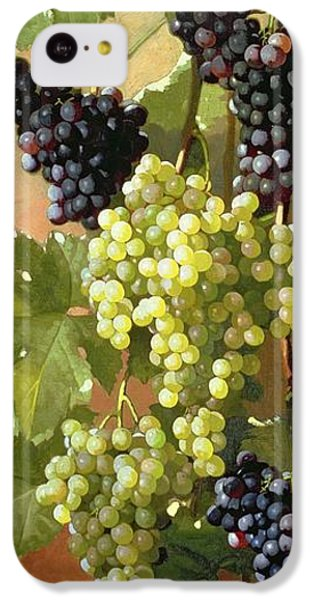 Grapes IPhone 5c Case by Edward Chalmers Leavitt