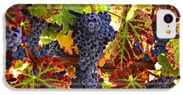 Grapes On Vine In Vineyards IPhone 5c Case