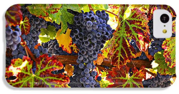 Grapes On Vine In Vineyards IPhone 5c Case by Garry Gay
