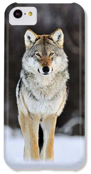 Wolf iPhone 5c Case - Gray Wolf In The Snow by Jasper Doest